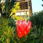 gardens of Sangoma