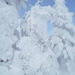 見事な樹氷