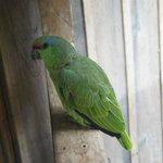 Juanita, the parrot