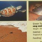 die verschiedenen Schildkröten Arten