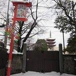 綺麗になった浅草寺が見たくて。