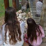 Leopard enclosure