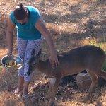 Joanna et un chevreuil