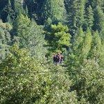 Tree Top Perch