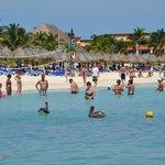 пеликаны на пляже