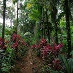 Jungle way to waterfall