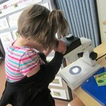 Exploring insects through the microscope