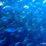 Translucent fish!
