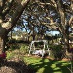 swinging under the trees