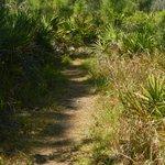 Tortoise Trail at Cedar Point