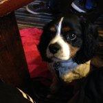 Kacy hoping my dinner will drop on the floor