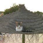 One of the locals cat