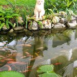 Beautiful grounds... visit the fish and cats at the pond!
