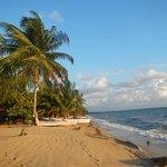 Beach next to Tipple Tree and Cocoplum