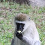 Cautious of the naughty monkeys