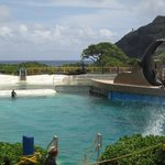 Dolphin Cove show