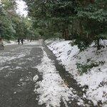 Meiji Jingu- main road