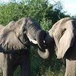 Elephant Dispute