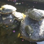 Turtle family in the grounds