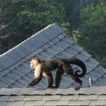 Monkeys in the morning