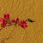 Hummingbird by the pool