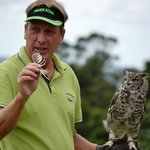 Hooter the owl