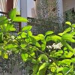 fiori d'arancio nel patio