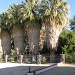 Gorgeous palm trees on the grounds