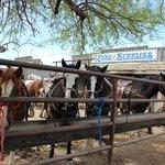 Horses awaiting riders