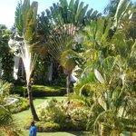 garden in front of room 5204