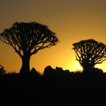 sunset at Quiver Tree Forest