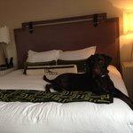 View of bed (Kona Dog says hi)