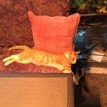 Король заведения - кот