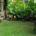 San Antonio´s garden