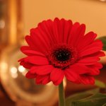 Fleur a table...