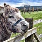 A happy donkey on the farm!