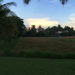 The rice field at dawn