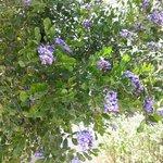 Beautiful bush in bloom at entrance