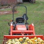Fall gourd crop.
