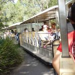 Saving legs! The zoo's shuttle bus is more like a train.