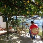 Breakfast in the lemon grove