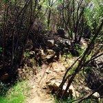 Hiking trail on Pratt trail