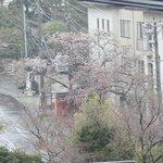 ホテルの廊下からの眺め 桜はまだつぼみでした