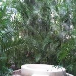 Beautiful landscaping on the grounds of Hacienda San Jose