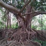 Beautiful tree on the grounds of Hacienda San Jose