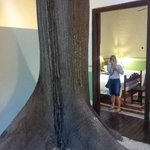 Suite with a tree