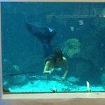 Mermaid show at the Oceanarium