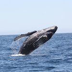 Whale Watching on a Zodiac -- fabulous!