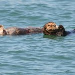Otter & Pup