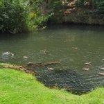 Pond & ducks